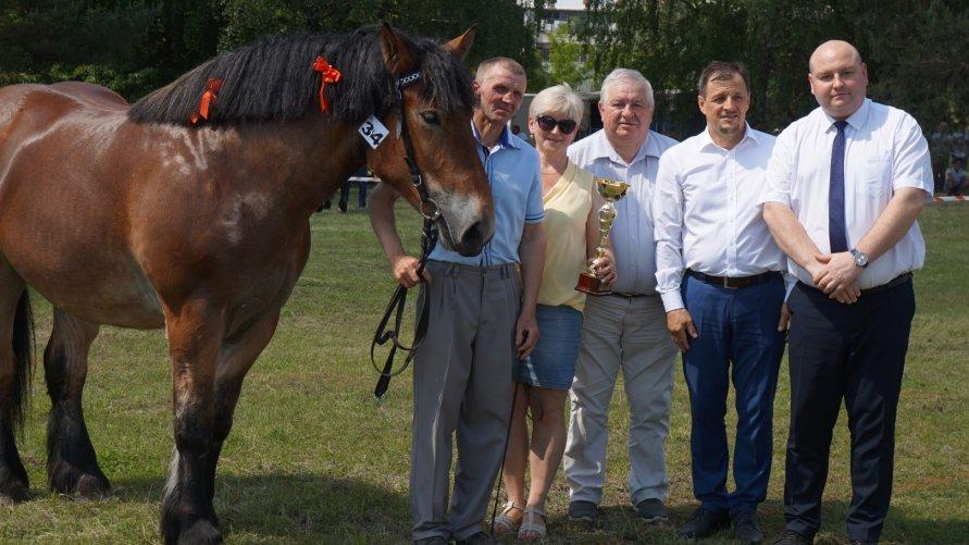 Konie z zimną krwią Kliknięcie w obrazek spowoduje wyświetlenie jego powiększenia